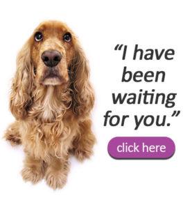 Jennifer's Pet Rescue, Inc | Non-Profit Pet Adoption -Jennifer's Pet